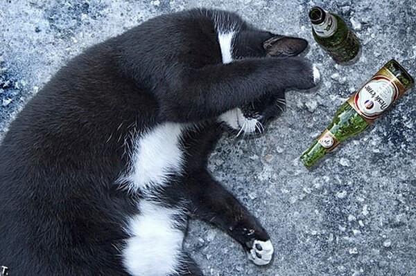 Не пей, Маркиз...