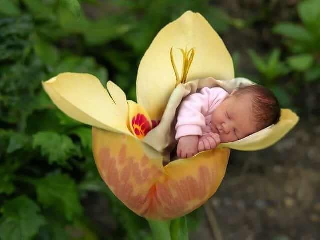 Открытка с прибавлением в семействе, рождением взрослой
