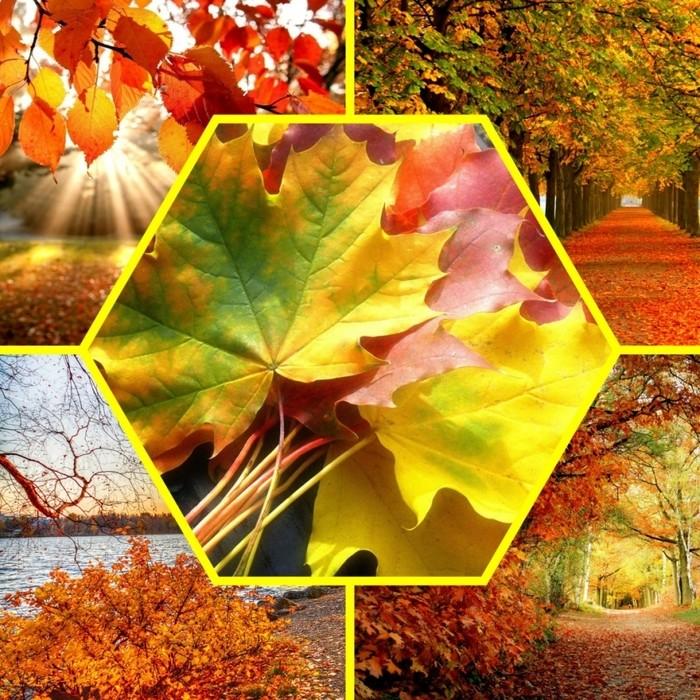 может картинки в статусах на тему осень кто