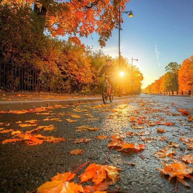 Эдуард гордеев фото осень в царском селе