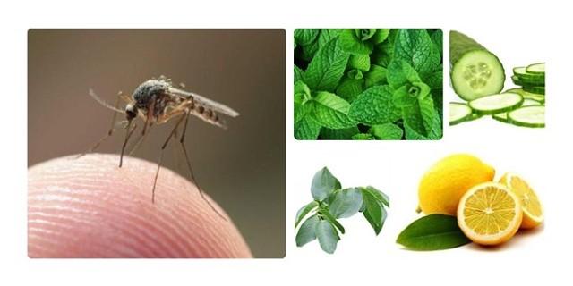 insecte împotriva lămâii condilom de îndepărtare a anusului