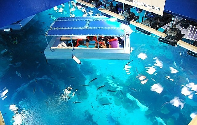Крупнейший в мире аквариум дубай оаэ балтийский дом международный фестиваль