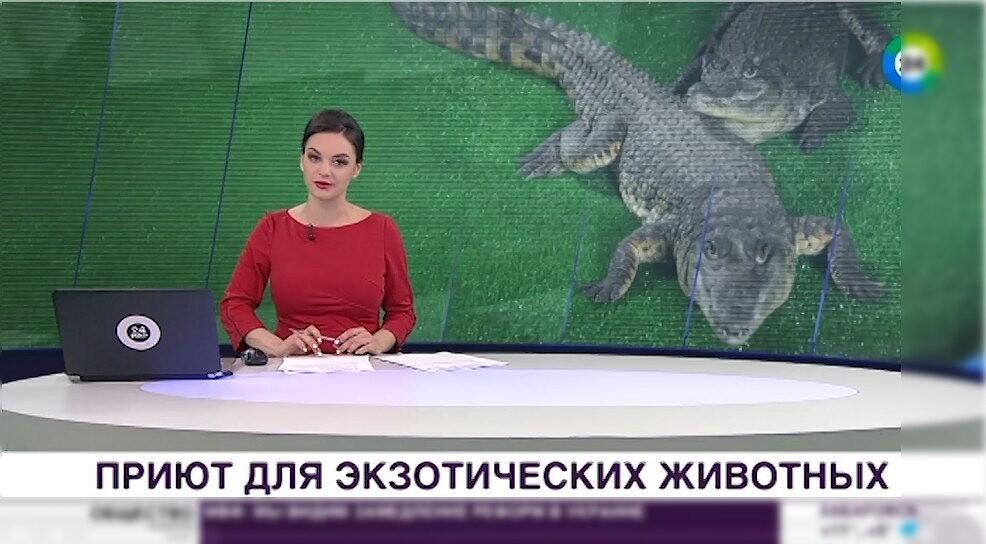 Как это было: Видео — Под Коломной появился приют для крокодилов #kolomnareplay