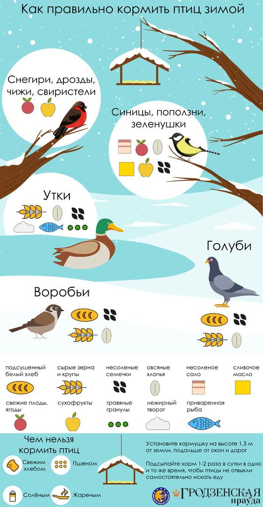 Кормить птиц пшеном и свежим хлебом НЕЛЬЗЯ!