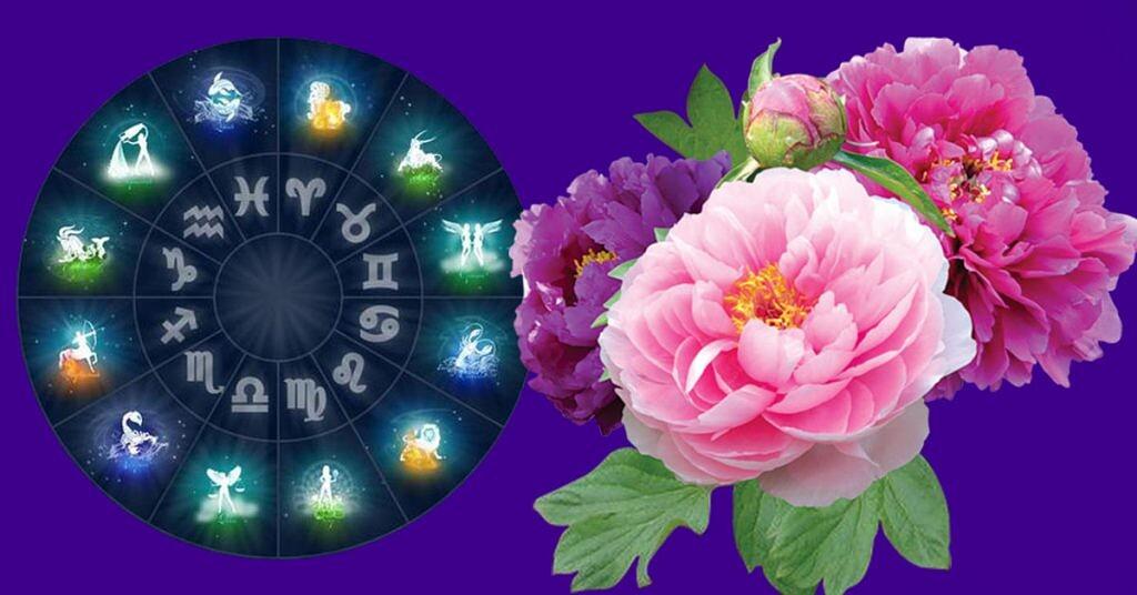 Цветок-талисман по Знаку Зодиака