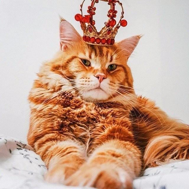 Картинки по запросу самолюбивый кот