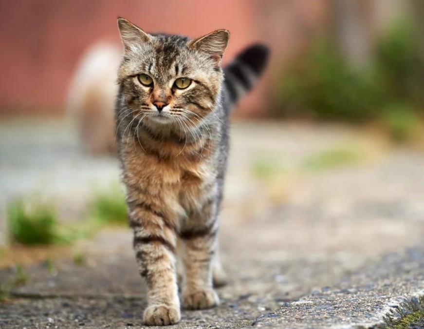 Кошка Кузьма