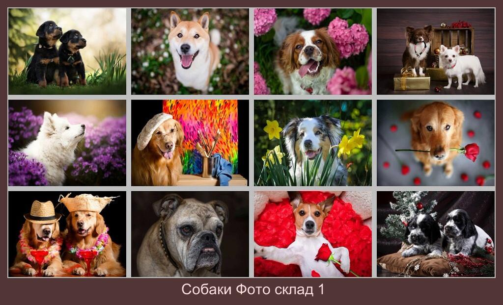 Собаки Фото склад 1