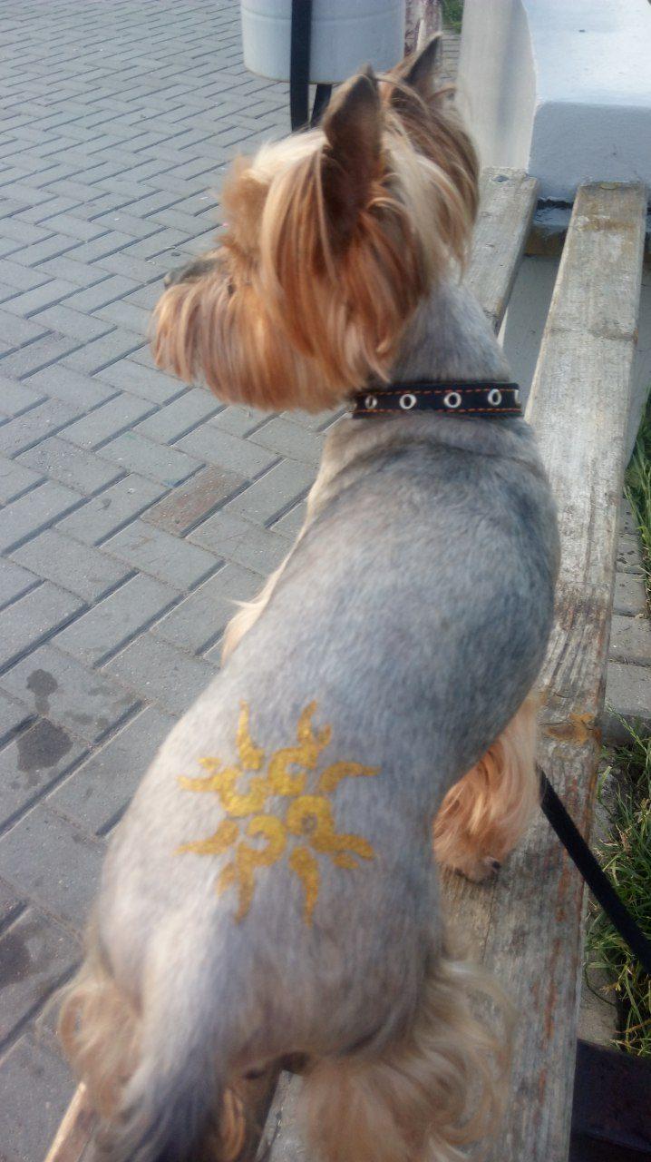 стрижка собак и кошекблеск татуветеринарные услуги возможен выезд