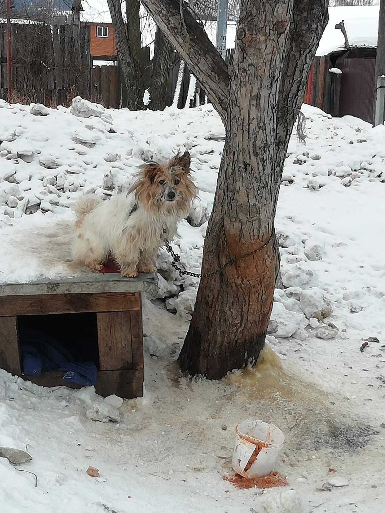 Вот такой звездец: когда-то ухоженная и красивая собака ...