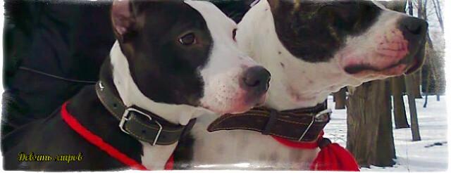 Плетеный оберег для домашних животных  I?r=AyH4iRPQ2q0otWIFepML2LxRO1V8UVLuAikdMemLo0-nnQ