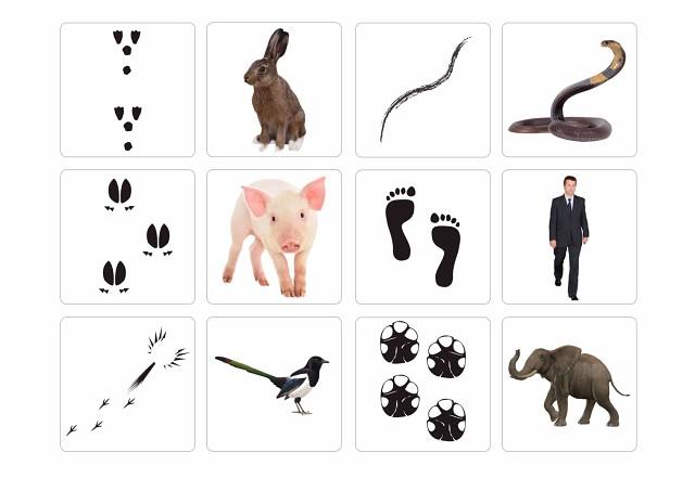 Дидактическая игра чьи следы в картинках для подготовительной группы