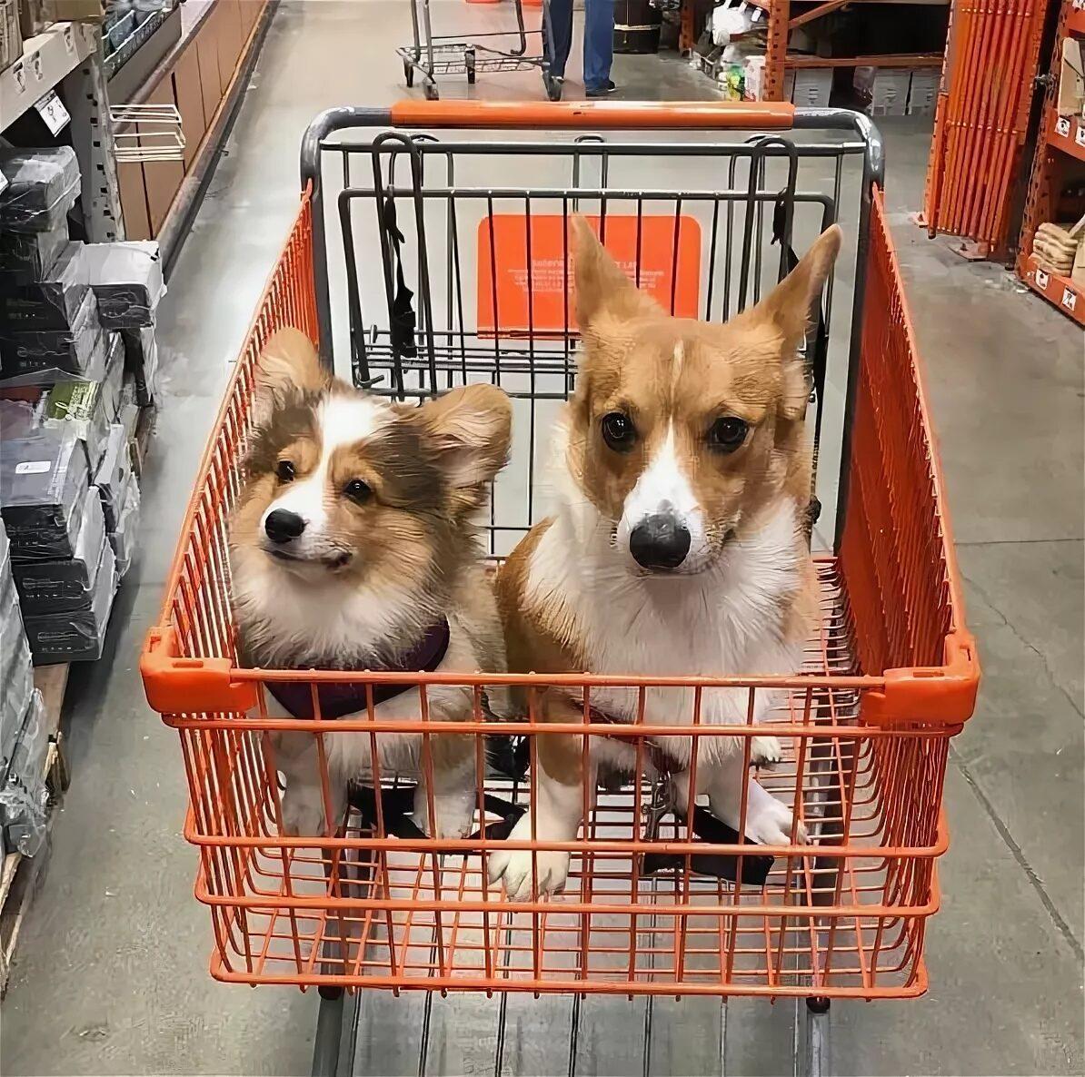 4 Лапы Магазин Товаров Для Животных