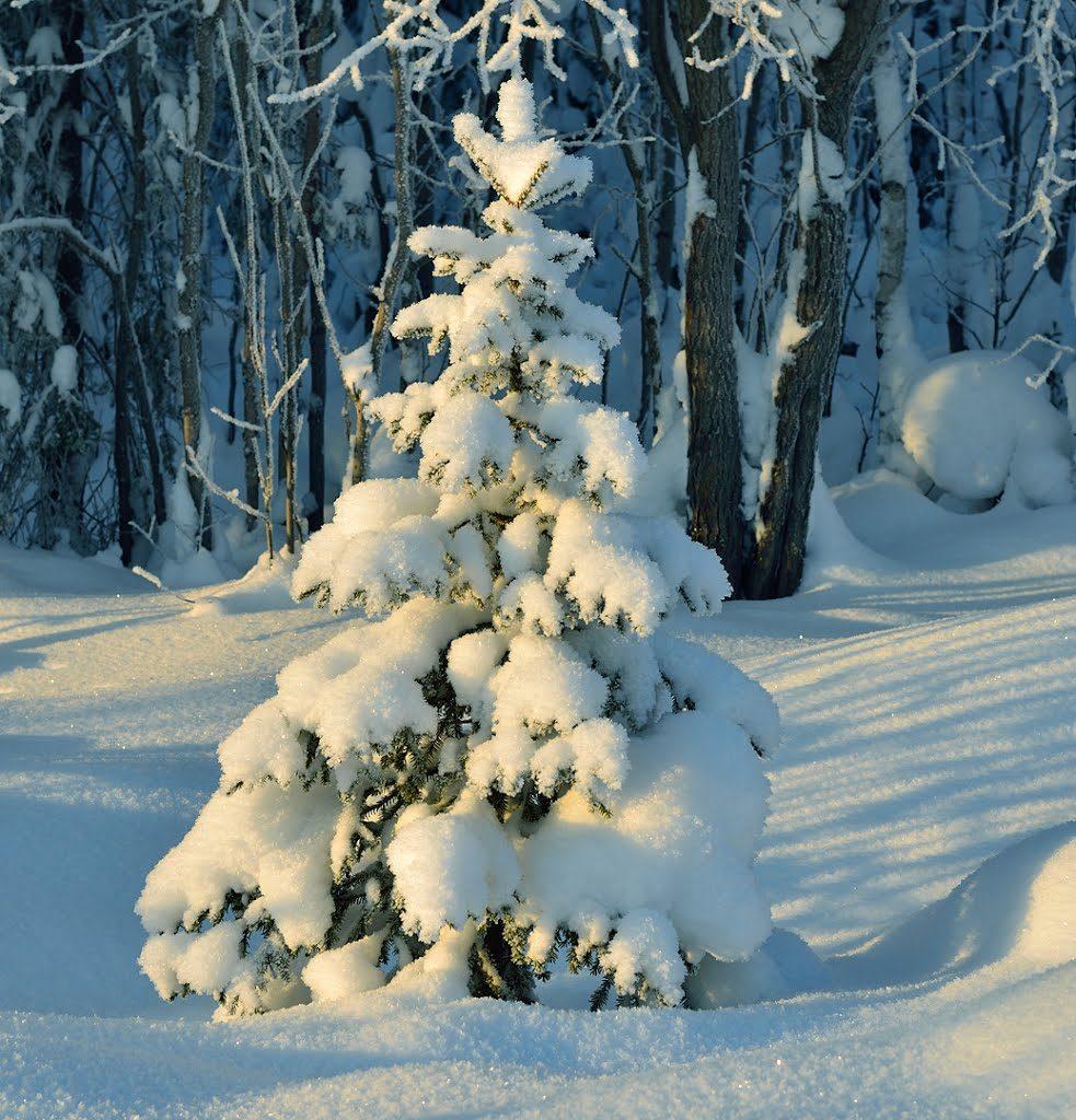 находитесь картинки елочки зимой черному укрывному материалу