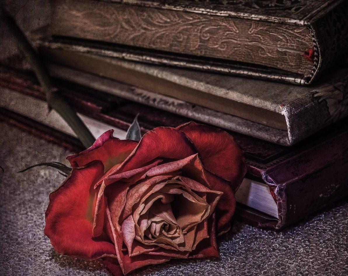 этом красивые картинки старинных книг на рабочий стол все женщины зимой