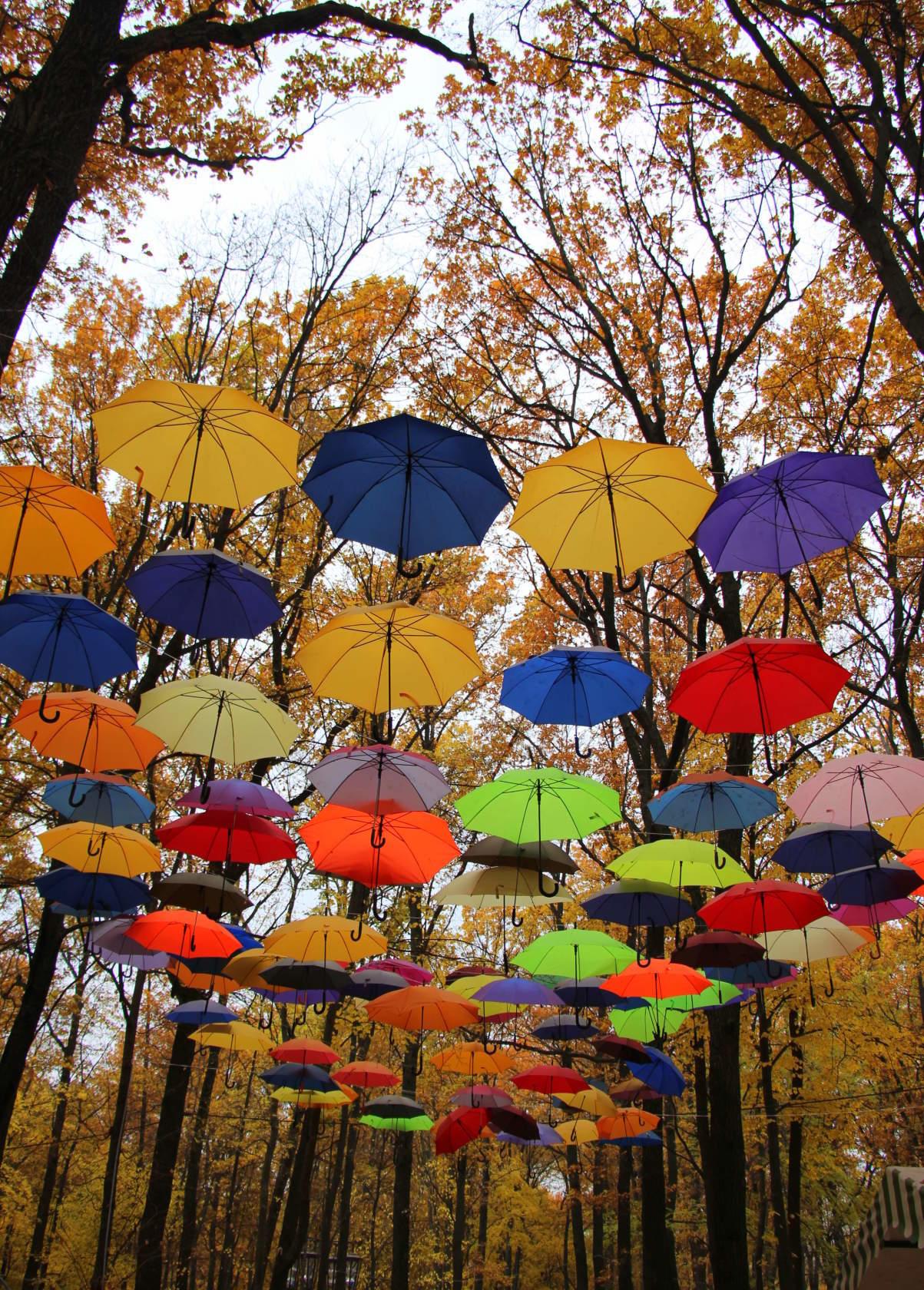 тому все прикольные картинки осень и дождь любопытство