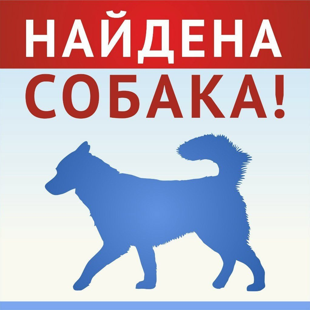 найдена собака картинки очень