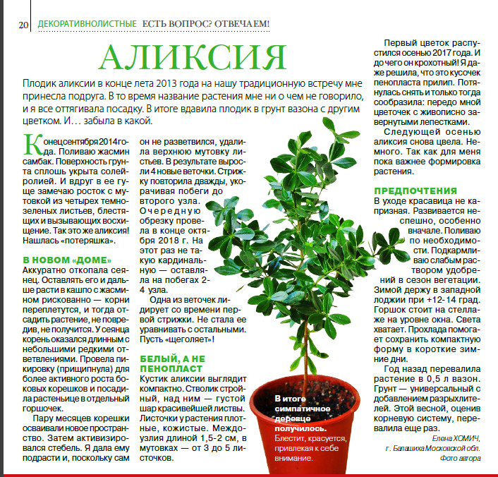 статьи о растениях из  газет и журналов - Страница 8 I?r=AyH4iRPQ2q0otWIFepML2LxRVkZ-DeGy9gcDqO6dEO1vzA