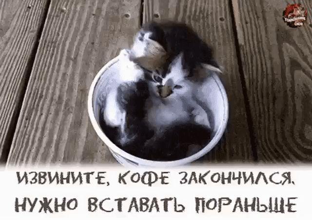 Чайная беседка (2019 г.)