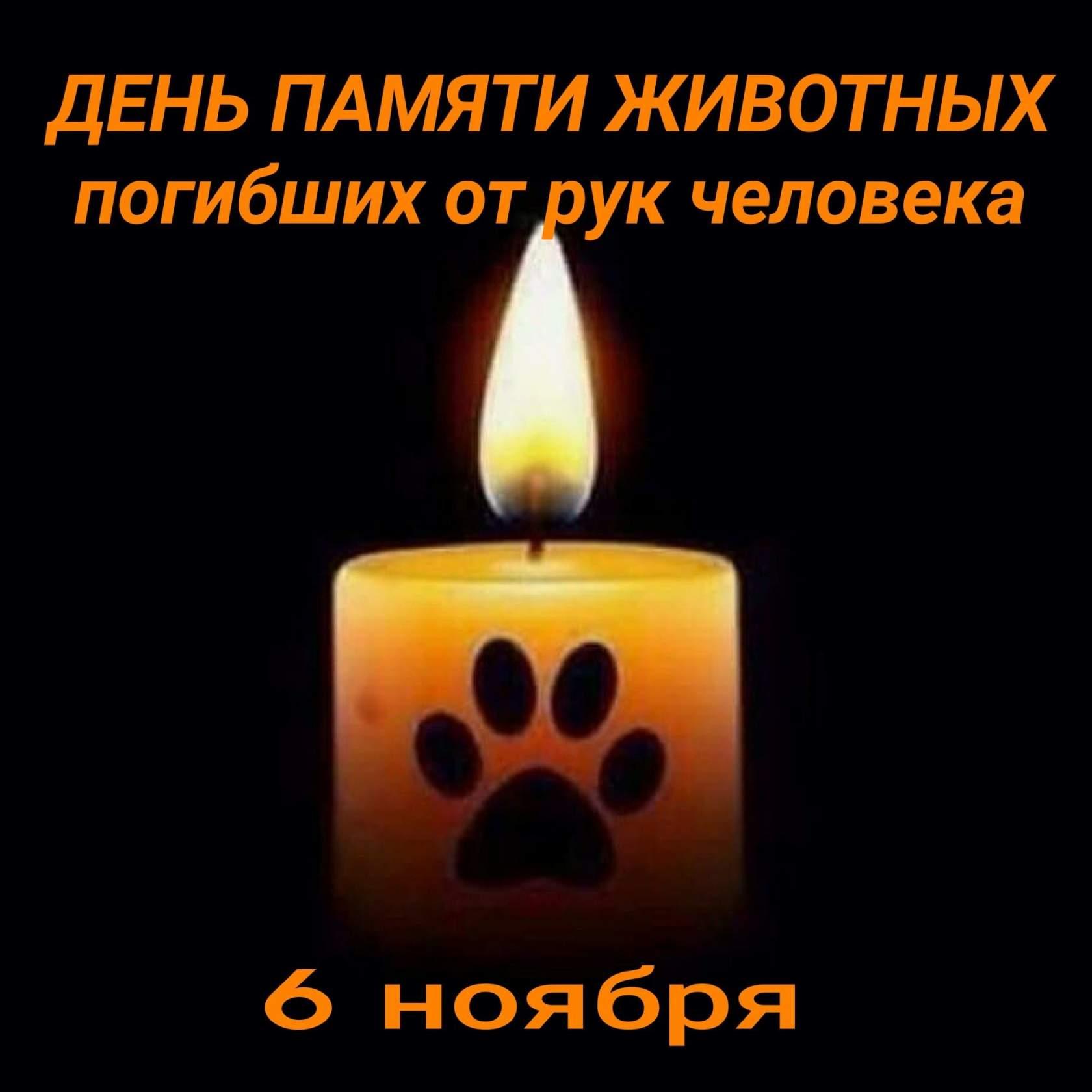 картинки свеча памяти животным выстреле часть пороховых