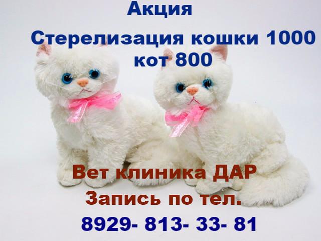 Дар, ветеринарная клиника, ул. 50 лет ВЛКСМ, 30Б, Владивосток ...   480x640