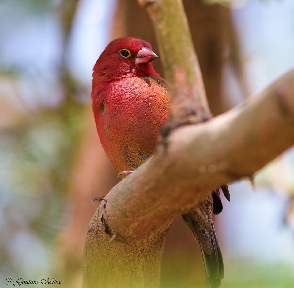 кухня отдельным птица амарант фото спотыкаться видеть