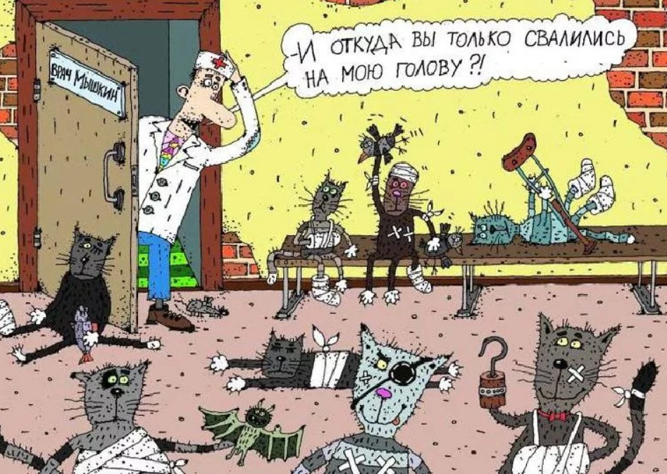 Открытки открытка, смешные картинки с ветеринаром