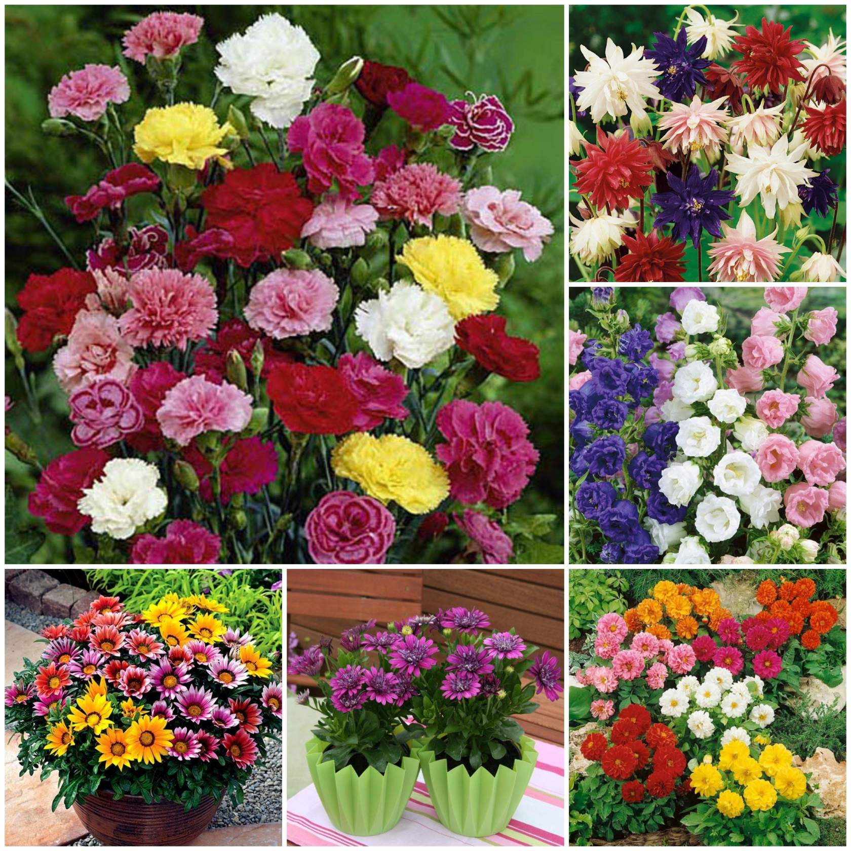 Семена цветов почтой казахстан