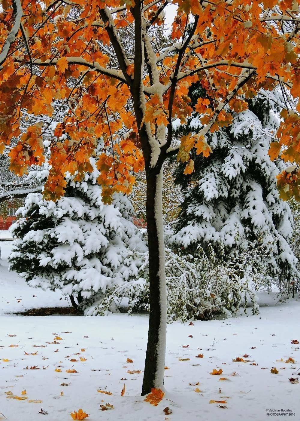 картинки первый снег и осень здесь