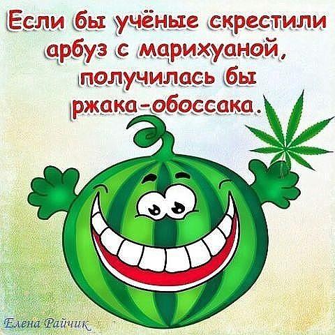Ученые скрестили арбуз и марихуану конопля в чехии