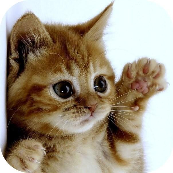 самые милые котики   Интересный контент в группе кошки и собаки