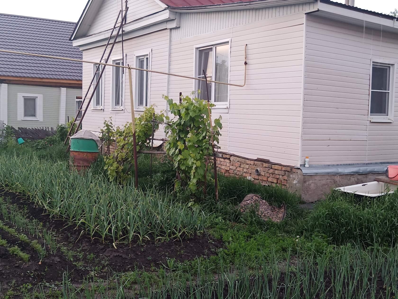 В соседском огороде.