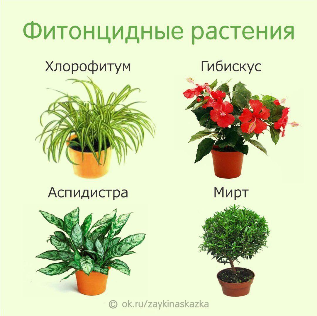 счастью, каждую самые полезные комнатные растения фото фотографии поклонникам