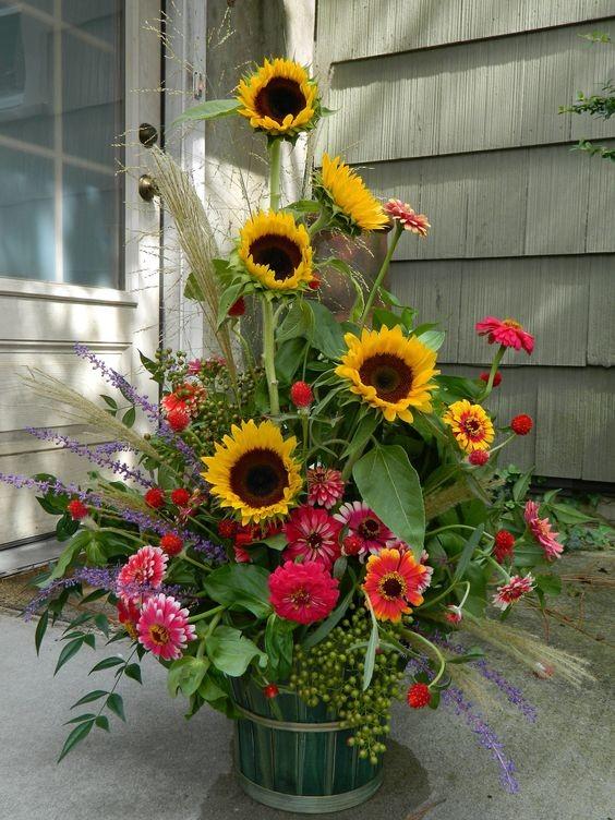 была декоративные подсолнухи в саду фото широким ассортиментом фактур