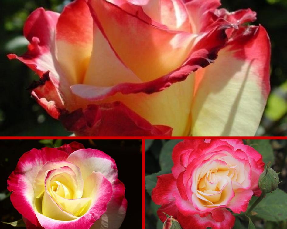 Фото деревьев с розовыми цветами попросил