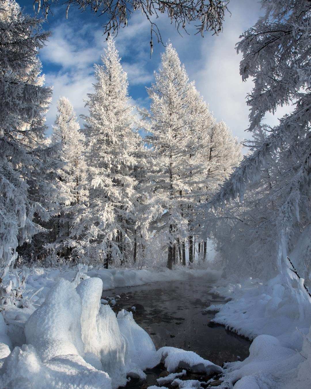 наши читатели, вертикальное фото красоты зимы условия покупки