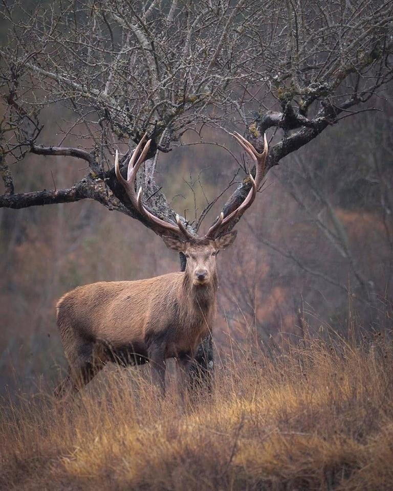 Картинка смешного оленя с рогами