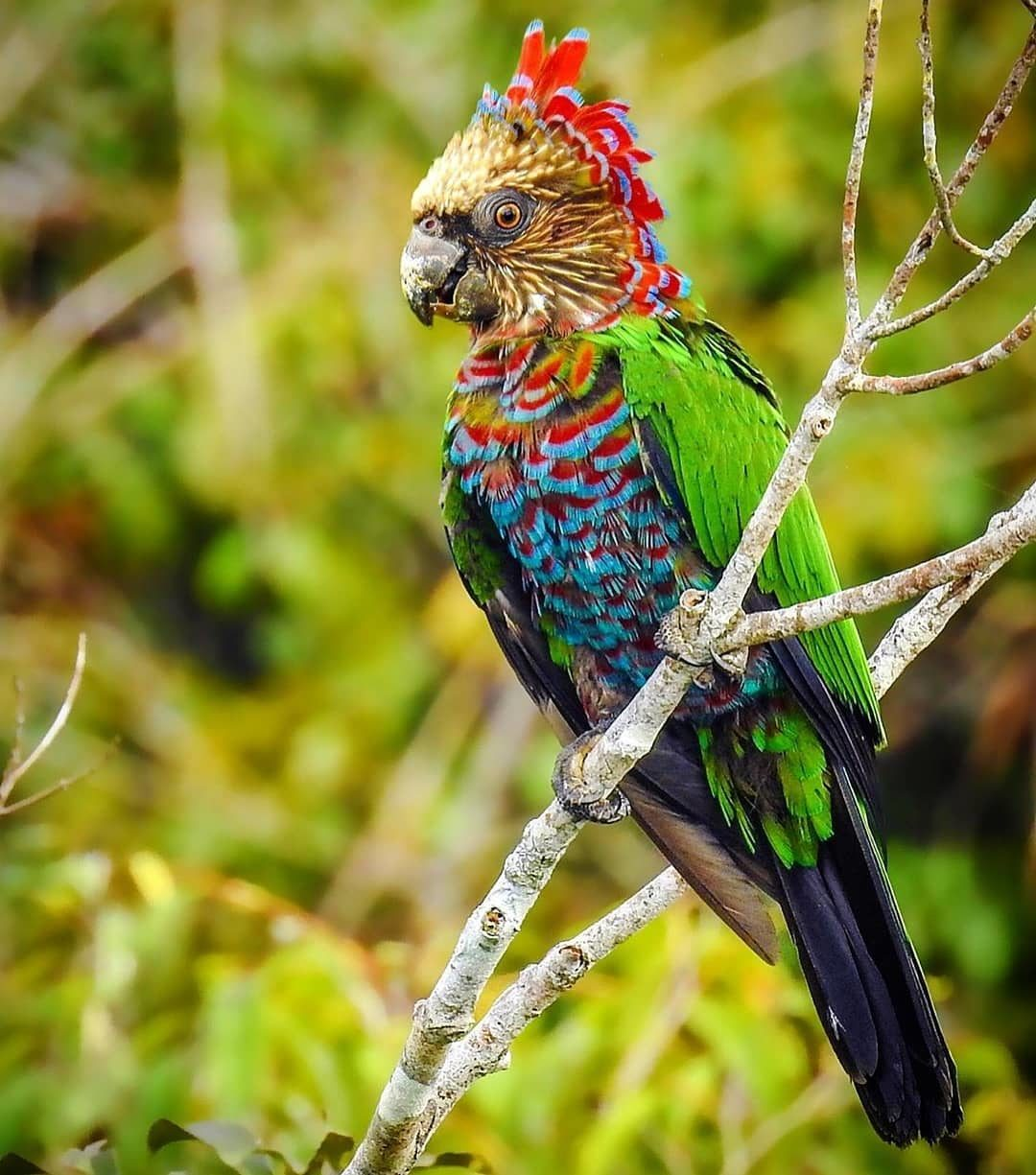 Картинки найден попугай