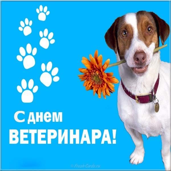 Прикольные поздравления с днем рождения ветеринару составленный оценкам