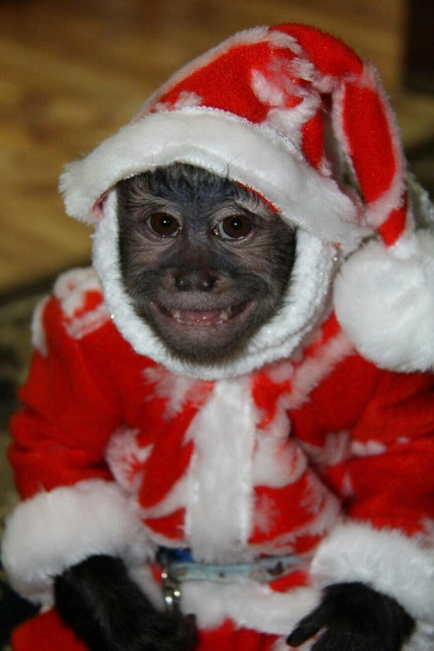 поздравления деда мороза с новым годом обезьяны чем