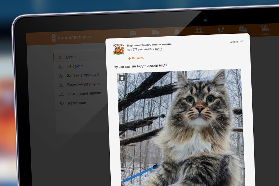 Беспородные Васьки и британские Маруси — какие кошки популярнее всего у россиян