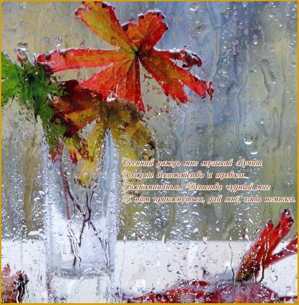 пожелания с добрым дождливым утром в картинках отфильтровать интересующие