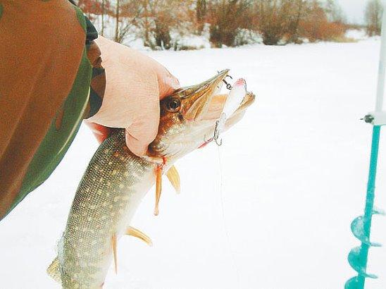 Рыбалка на жерлицы по первому льду за щукой