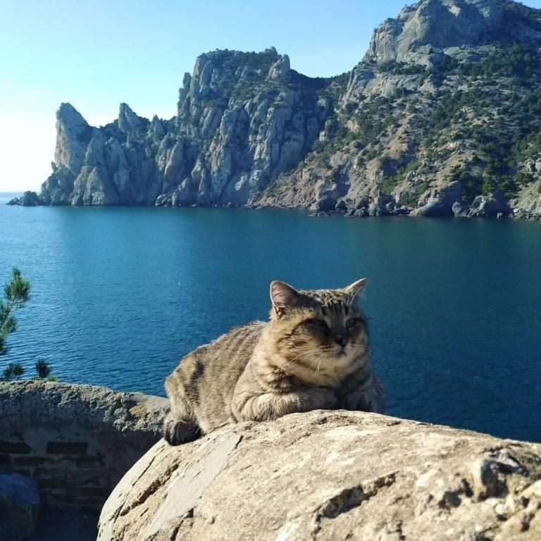 отдыхающий котик фото это самые популярные