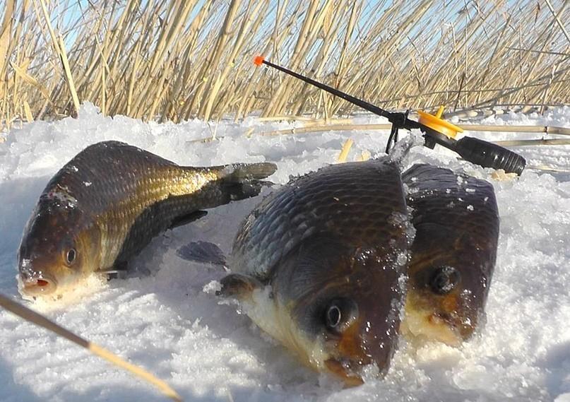 Рыбалка зимняя на карася с ночевкой