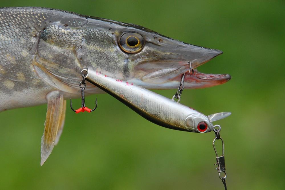 Звуковой приманка рыбы