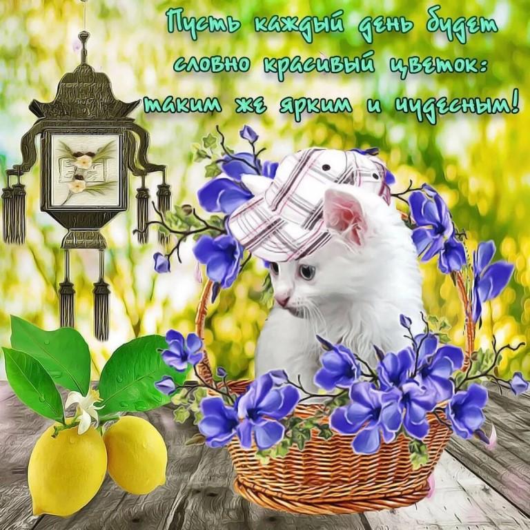открытка с добрым утром веселая весенняя стартер представляет