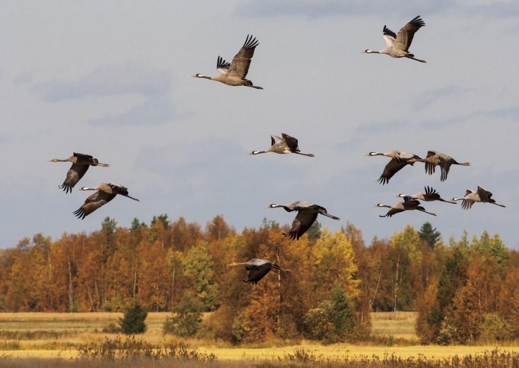 совершением покупки картинки осень стаи птиц вертикальные можно сделать поздравительным