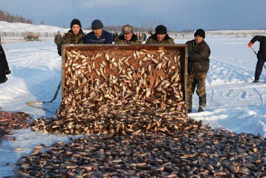 Как ловят карасей якуты зимой