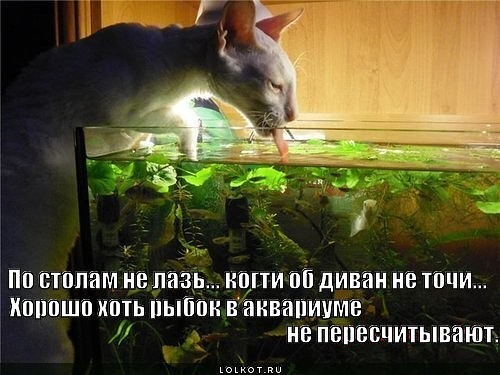 этом смешные картинки про аквариумы идеальный вариант, если